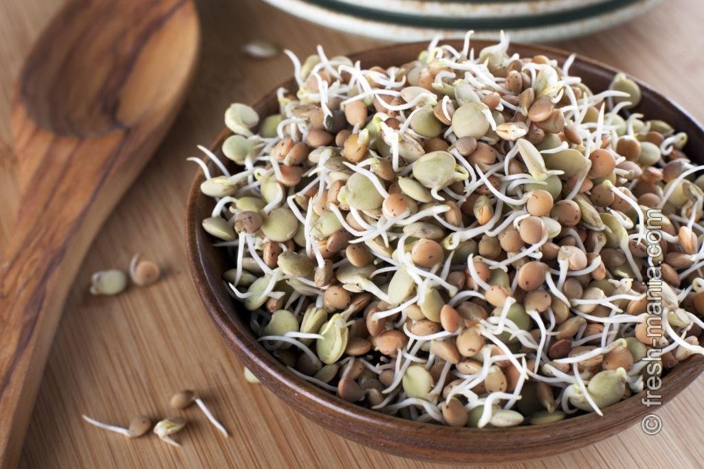 Проростки чечевицы — живая энергия