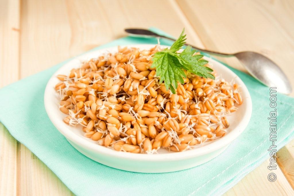 Проростки пшеницы — природный стимулятор