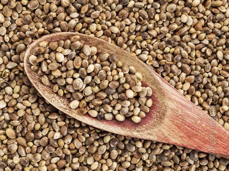 Семена конопли знают толк в здоровье