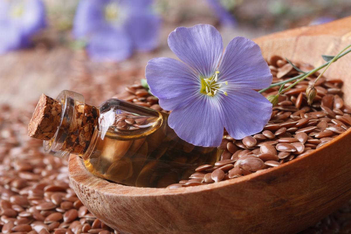 Семена льна: инструкция по использованию
