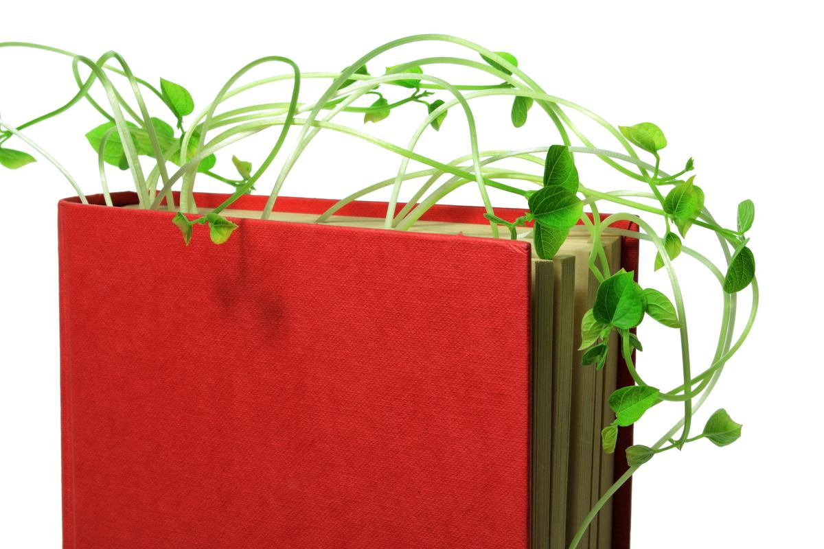 О книге Наталии Кайрос «Проростки – живая еда. Алхимия питания»