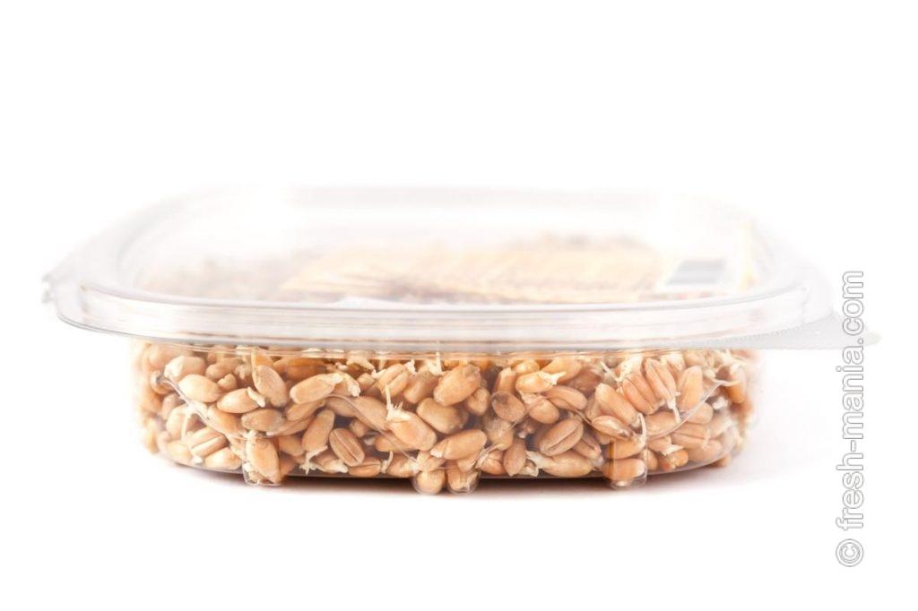 Прорастить пшеницу можно в спраутере, сите или банке
