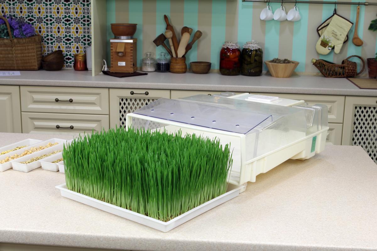EasyGreen Sprouter – автоматический проращиватель семян