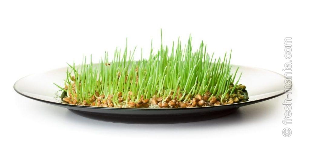 Проращивать семена можно традиционно в обычной тарелке, в банке, на сите, в мешочке...