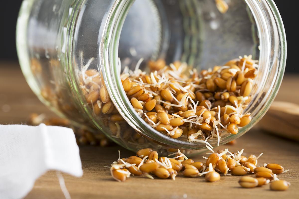 Как прорастить семена в домашних условиях
