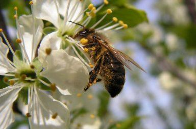 Польза майского меда