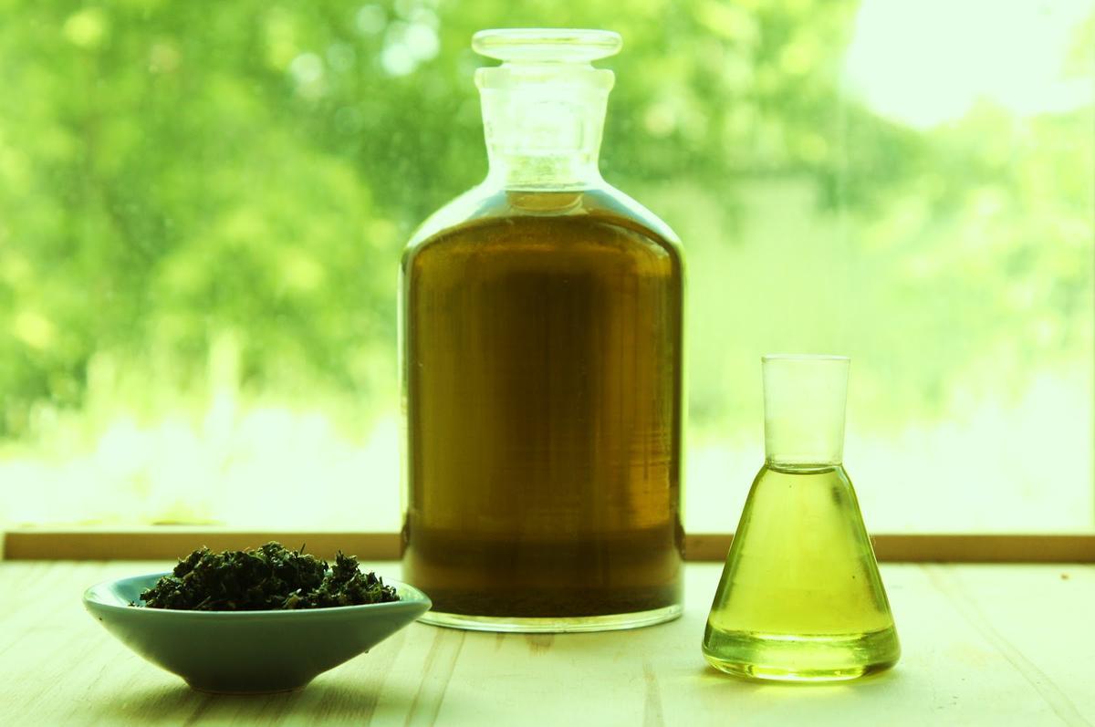 Масло крапивы: превращаем сорняк в средство красоты
