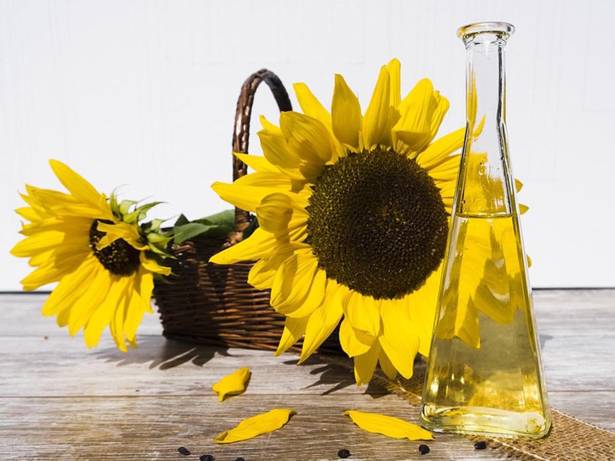 Рафинированное и нерафинированное масло: технология производства