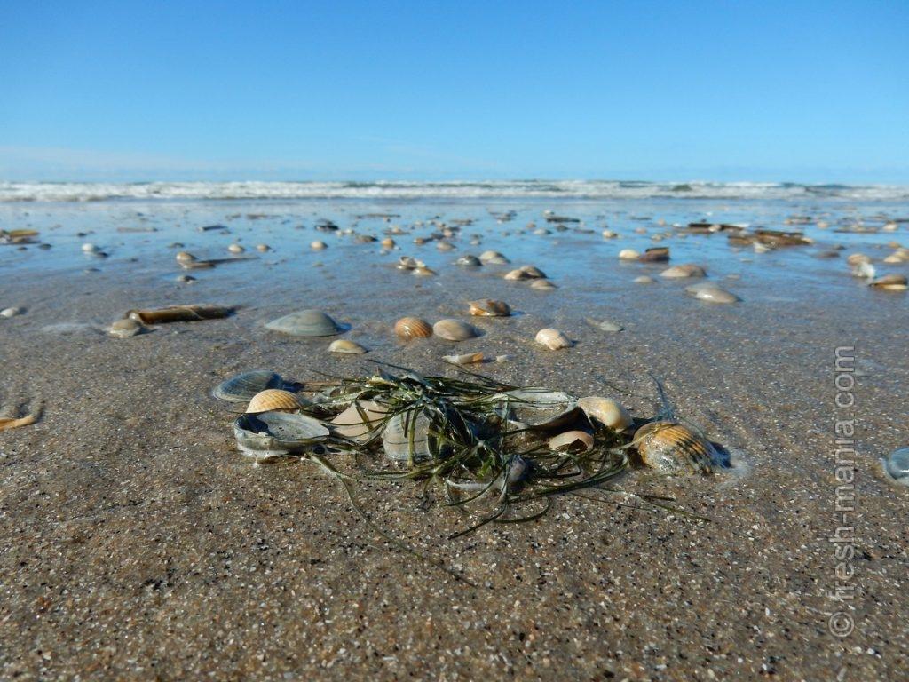 Живущие на морских побережьях не страдают дефицитом йода