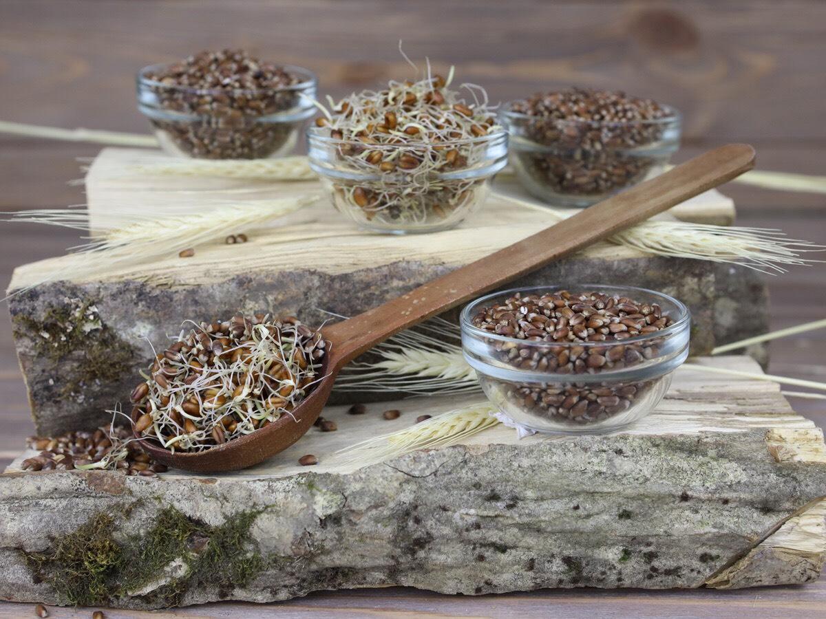 Чернобровая пшеница – уникальная злаковая культура. Рецепт лепешек