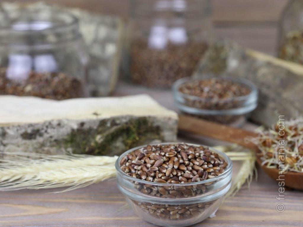 Чернобровая пшеница также интересна на вид