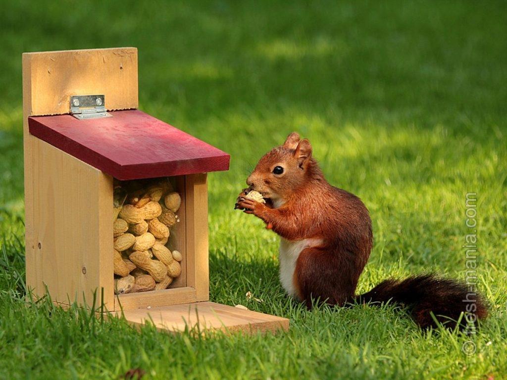 Все любят арахис