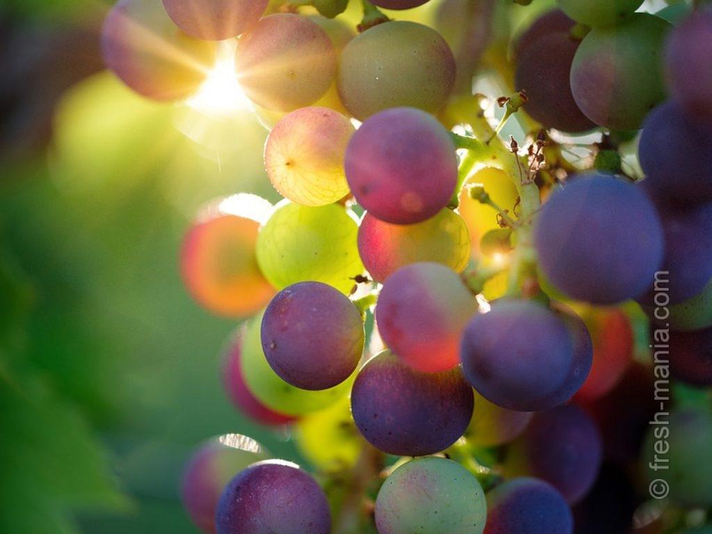 Сложный состав винограда формируется на солнце