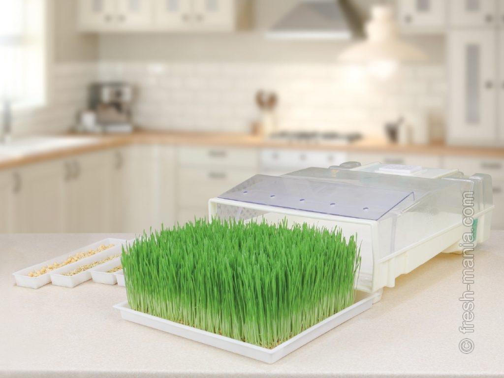 Зеленые ростки в электрической микроферме EasyGreen EGL 55