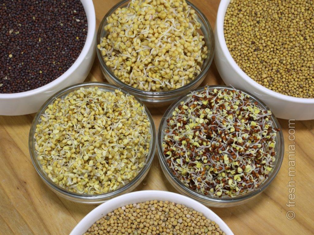 Для проростков можно использовать семена желтой и черной горчицы