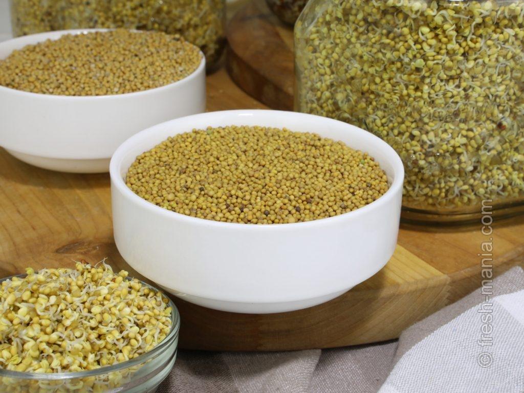 Горчица – это не только соус, но и вкусные семена и проростки