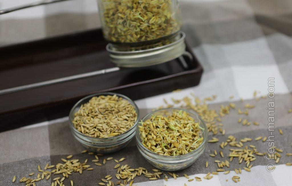 Легче всего получать вкусные проростки – с помощью специальных устройств