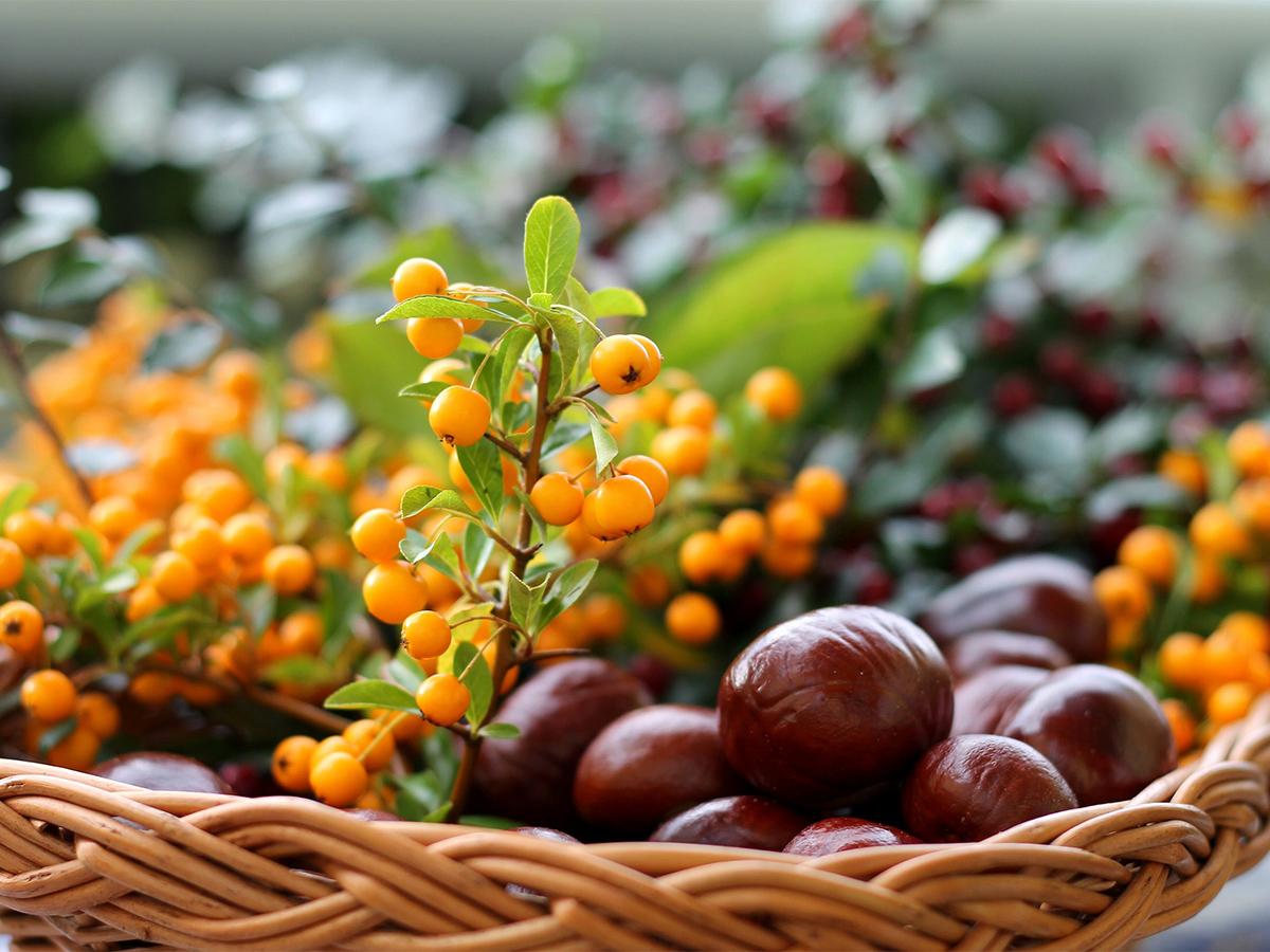 Чем полезна облепиха: уникальные свойства и способы употребления ягод